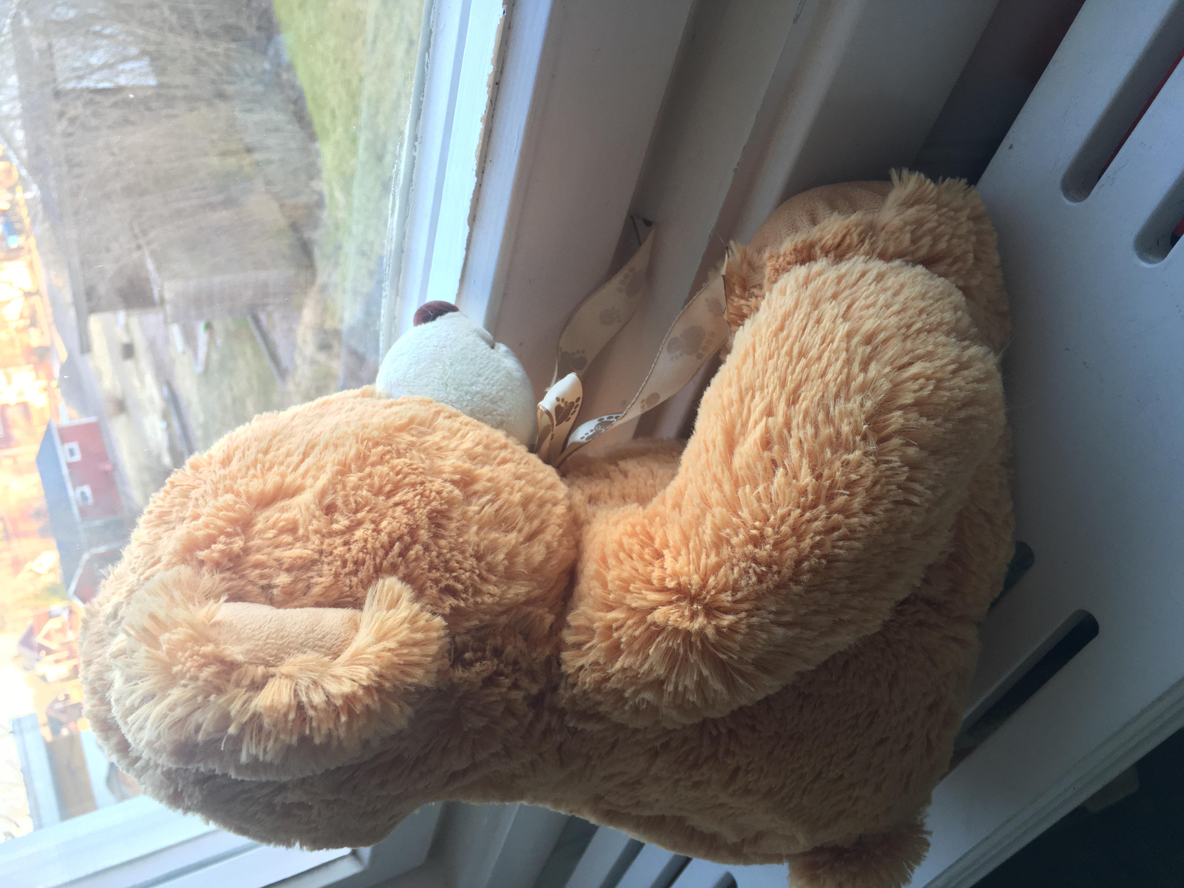 Teddybjörnsjakt